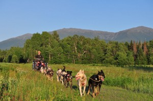 Summer Rolling Dog Sled With View Of White Mountains